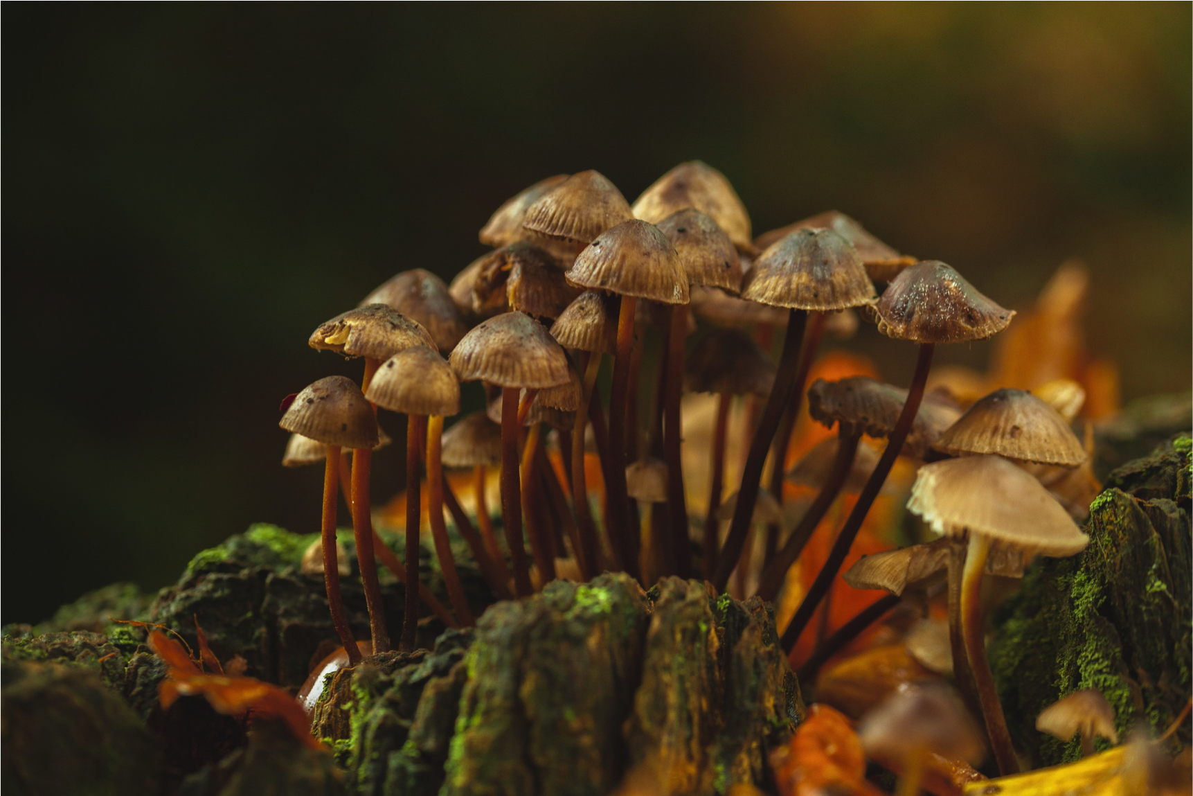 Video: Psilocybin 101, An Introduction to Magic Mushrooms (Webinar) | Dr.  Erica Zelfand | Functional Medicine Physician | Online Consultations